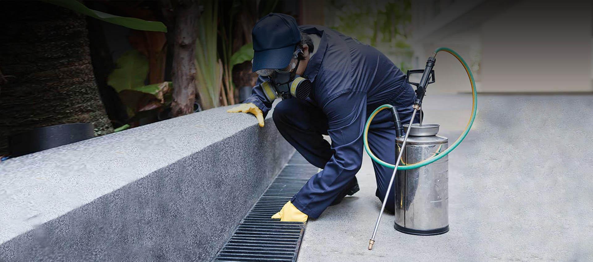 Servicios de control de plagas Chile | Alfapest