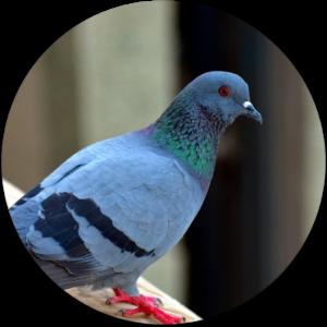 Servicios de control de aves Chile