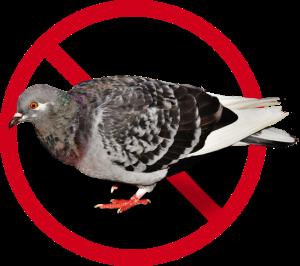 Servicios de control de aves